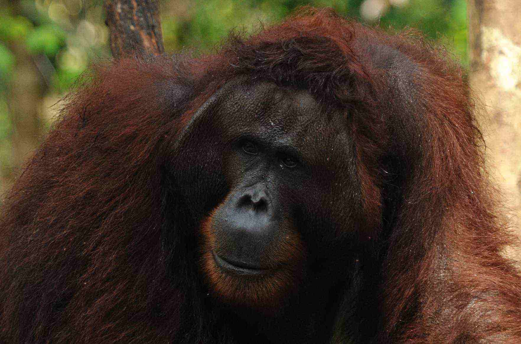 kutai park orangutan rain forest borneo kalimantan jungle tour guide trip adventure