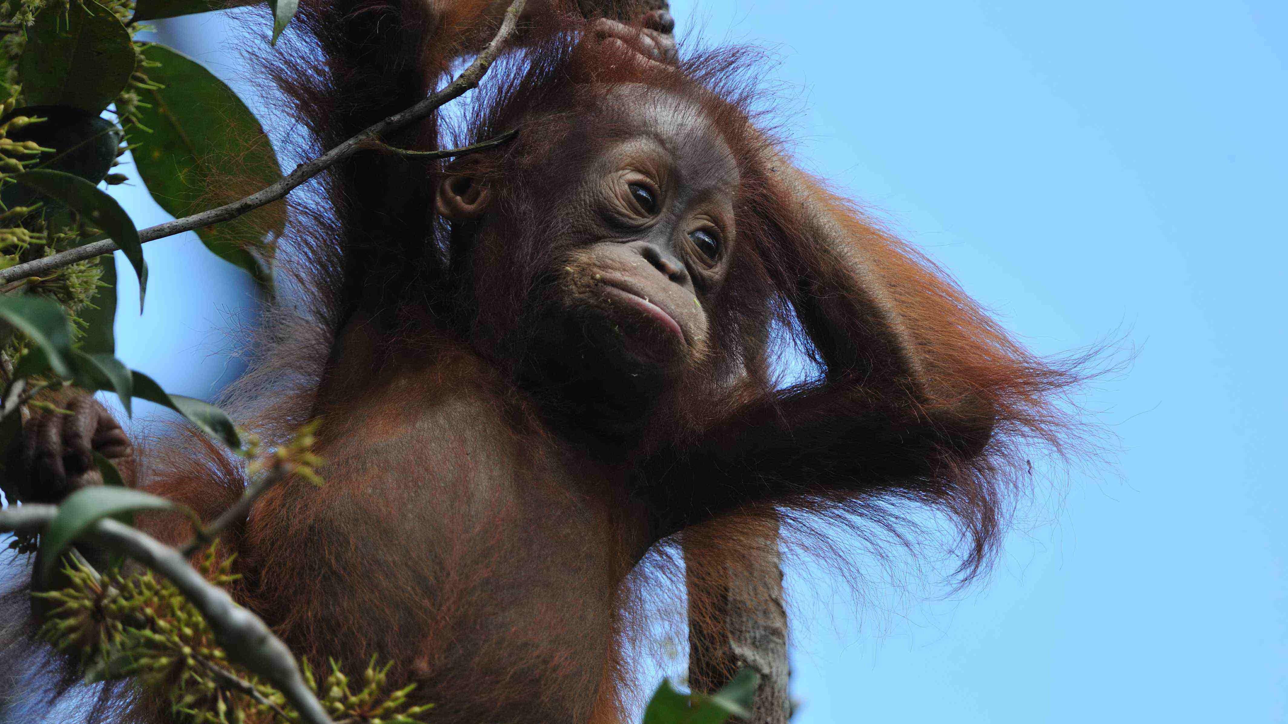 Kalimantan exclusive tanjung puting tour trip wildlife safari jungle rain forest dayak culture guide