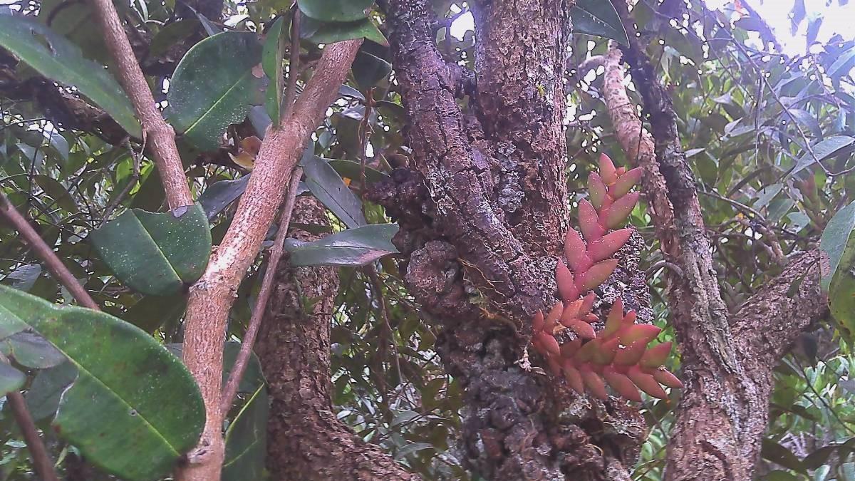 krayan highlands cloud rain forest authentic culture kayan mentarang jungle